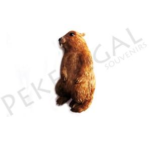 Imanes resina marmota